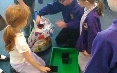 Our 'Plants' Investigation.