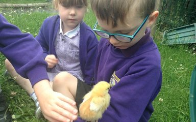 The chicks explore our Eco-garden!
