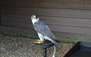 6D Visit from Kielders Birds of Prey Centre Letter