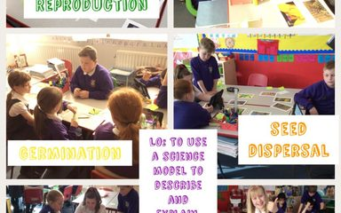Year 5/6 – Science – Using scientific models to explain plant reproduction