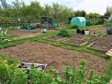 reception – allotment visits | rowlands gill primary school